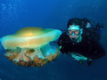 diver check our fried egg jelly fish. fish