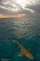 Sharky Sunset