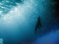 Sea lion heaven
