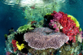 Beautiful shallow reefs near FakFak Indonesia
