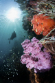 Among soft corals Triton Bay
