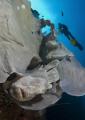 frogfish hiding sponge wall Balicasag Island Philippines