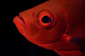 This glasseye posed ever so nicely me my 1st outing D70Aquatica setup D-70/Aquatica D-70Aquatica D-70 Aquatica D70/Aquatica 70/Aquatica