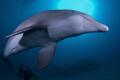 Playful dolphin Roatan