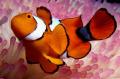 Its just Nemo