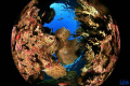 One pictures winning portfolio Epson Red Sea World Underwater Images held Eilat last november
