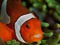 Hey Nemo...how are you Nemohow Nemo how