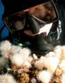 My buddy checks nudibranch while diving oil rig off coast Southern California. California