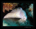 Litle geometric moray Marsa Egla Egypt Canon S90 hand torch light