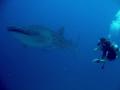 south ari atoll mamigili faru