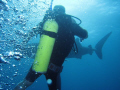 Very candid photo shot moment diver was reacting tap shoulder warn them encounter. Notice direction bubbles truly horrific surprise 50 feet safety check encounter