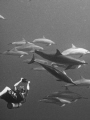 My buddy Dave local Hawaiian spinner dolphins. dolphins