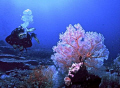 Great visibility soft coral. Red Sea its best. coral best