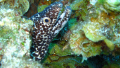Moray Eel close
