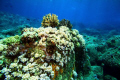 Reef Mauritius Soft Corals Pointe Aux Piments Underwater Photography