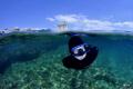 My son Robi swimming nearby island Brijuni...NikonD90 Tokina 1017 Brijuni...NikonD90, BrijuniNikonD90, Brijuni NikonD90, 10-17 10 17
