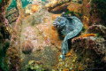 wreck superintendentFishing seiner name Lysva missing 1972 reason installed 11 victims. Divers discovered chance 2002 deep 30 meters.While was researching he watching me eerie place. .. fringed blenny victims deep- meters. meters place