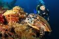 Turtle old school mask diver