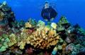 Diver Kona Hawaii