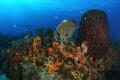 cool view colorfull reef... Nikon D300 Ikelite housing DS160 strobes reef