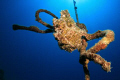 Special KnotFrogfish sitting rope