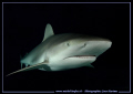 End days dive.... Reef Shark... O... dive Shark :O)... :O)