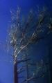 Underwater tree II