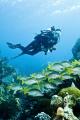 Seascape Randys Gazebo Little Cayman. Cayman