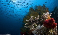 This image taken during 6th Underwater Photography Competition Wonderful Raja Ampat 6-th th