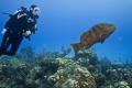 Friendly Grouper Randys Gazebo Little Cayman. Cayman