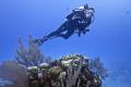Diver Randys GazeboLittle Cayman. Cayman