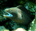 Small Eel rearing its head swam by. by