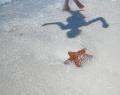Dancing shadow Starfish