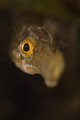 very curious pipe fish shot while freedivingNikon D7000 105mm Inon UCL 165 1250 f16 iso 100 1/250, 1250, 250,