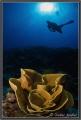 Diving Big Bend Yap Island