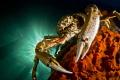 Spider Crab Pier. Pier