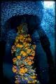Swirls fish under dock
