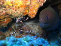 Whats mate Moray eel cleaner boxer shrimps one my favourite