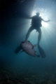 "Many people see underwaterworld alien place. this silhouet diver comes across sinister War worldslike preying innocent puffer fish.Nikon D100 Ikelite housing strobe Photoshop autocolorlevelscontrast place worlds-like"" worldslike"" worlds like"" fish. fish auto-color/levels/contrast auto-colorlevelscontrast auto-color levels contrast autocolor/levels/contrast auto color/levels/contrast"