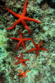 seastar together... together
