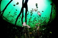 Water lilies garden