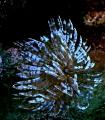 Alice Wonderland reef Curacao