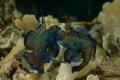 Mandarin Fish Fitting