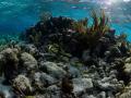 Aquarium reef North Sound