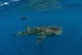 Whale shark Silver Banks. Banks