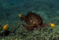 Turtle Spa. Big Island Hawaii. Spa Hawaii