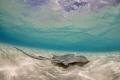 Stingray Cayman Islands