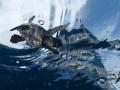Captured during sea turtle hatchling release. release