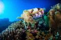 Cuttlefish reef. Taken canon 50D Tokina 1017mm inon strobes reef 10-17mm, 1017mm, 10 17mm,