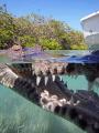 Sat very still mangroves Jardines de la Reina Cuba